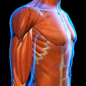Curcumin supports muscle strength and endurance